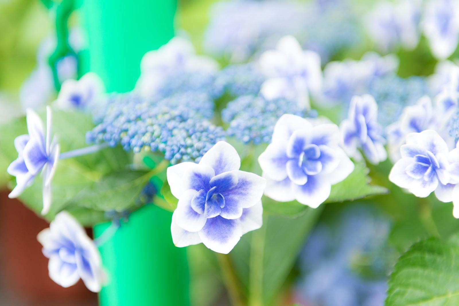 紫色の綺麗な花