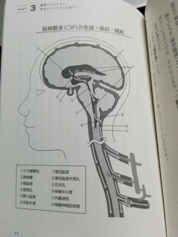 CSF(脳脊髄液)の経路