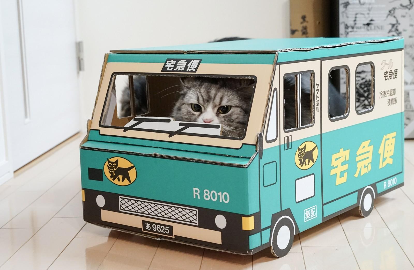 宅急便 荷物をお届けにあがりましたー(猫)