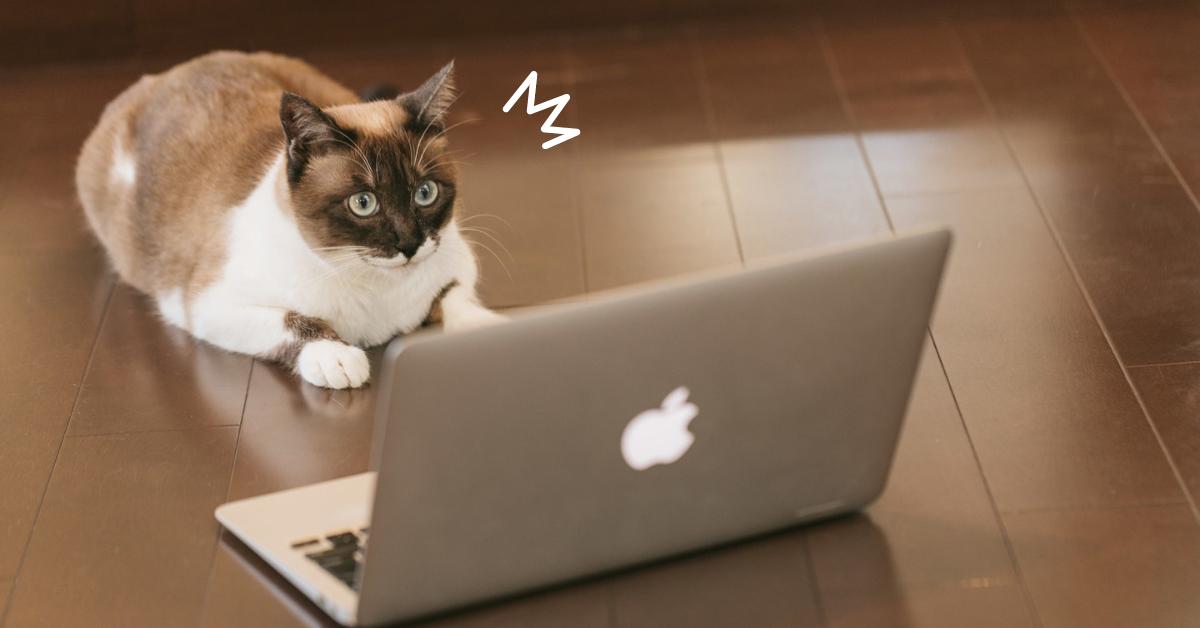 ネットを見て驚く猫