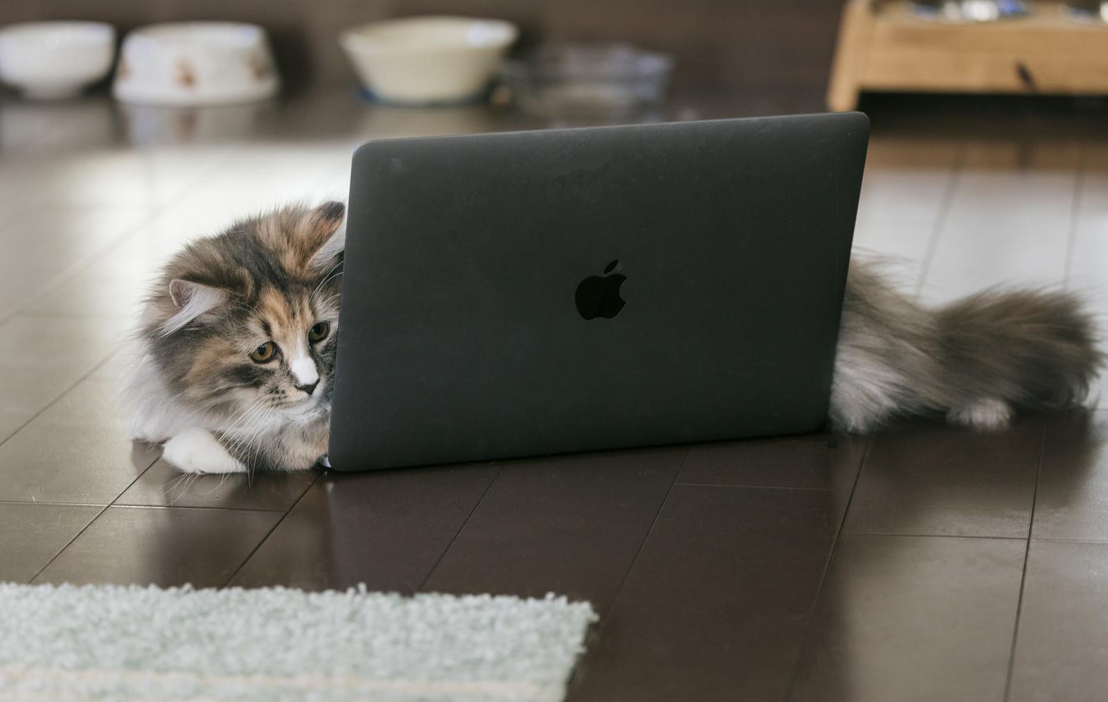 MacBookの上に横たわる猫のフリー画像